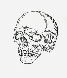 Likes | Tumblr #illustration #drawing #anatomy #skull