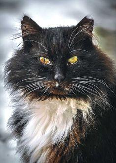 Gabriel Khiterer Captures Majestic Portraits of Stray Cats