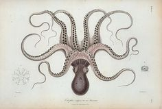 Google Reader (1000+) #illustration #retro #octopus