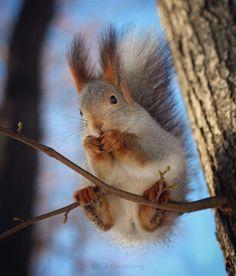 Nature Photography by Olga Apostolova