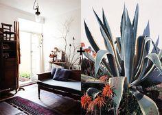 cacti and sofa #interior #design #decor #deco #decoration