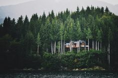 forest house #trees #forest #house #green