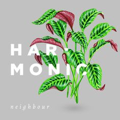 Harmonic (Cover Artwork) - By Sophia Mary Mac #band #draw #typography #design #plant #illustration #paint #painting #poster #layout #drawing #watercolour