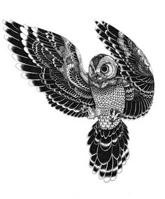 Wildlife part 2 on Behance #iain #macarthur #owl
