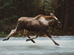 Spectacular Adventure and Outdoor Photography by Forrest Mankins