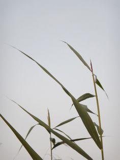 plants@phoenix-see PHOTOGRAPHIE © [ catrin mackowski ]