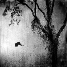 This Pain, photography by Leda Siloto #tree #bird