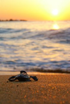 An image on imgfave #turtle #sunset #courage