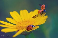 Macro Photography by Alex Greenshpun #inspiration #photography #macro