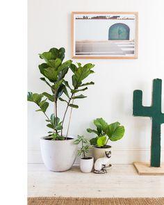 BRICK HOUSE #plants