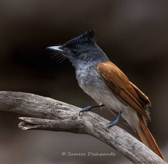 Beautiful Birds Photos of The World by Sameer Deshpande