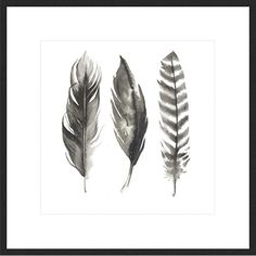 Framed Print 'Water Colour Feathers I' 50cm x 50cm