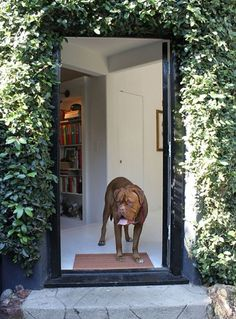 Kathleen & Maurizio's Imported Italian Home House Tour | Apartment Therapy Los Angeles #19th #60s #meets #doorway #italian #century #50s #antique #dog