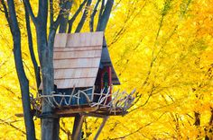 Treehouse Surrounded By Yellow, Tokyo, Japan #treehouse