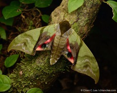 Wildlife Macro Photography in The Borneo Rainforest by Chien C. Lee