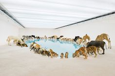 cai guo qiang falling back to earth #cai #guo