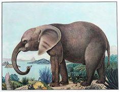 The Bestiarium of Aloys Zötl (1831 1887) | The Public Domain Review