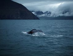 Untitled | Flickr - Photo Sharing! #whale #blue #cold #water