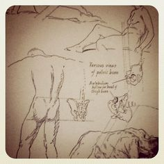 Instagram #anatomy #studies