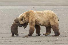 Bear hug by Ashleigh Scully