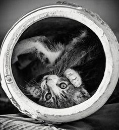 Animal Photography by Alex Greenshpun