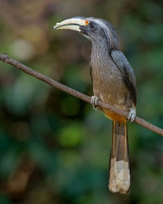 Birds of India: Majestic Birds Photography by Nitin A.Chavan