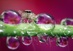 Insect Photography by Nordin Seruyan #inspiration #photography #macro