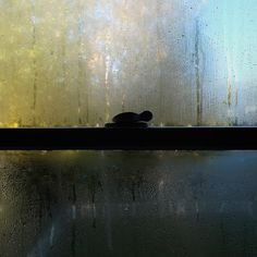http://windowseasons.tumblr.com; http://off-the-wall-b.tumblr.com/ #window #condensation