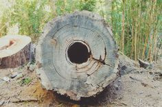 Tumblr #tree #photo #bariloche #nature #forest