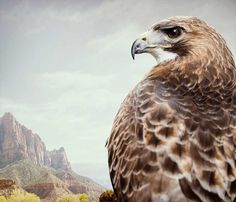 Birds of Prey: Fine Art Photography by Zack Seckler