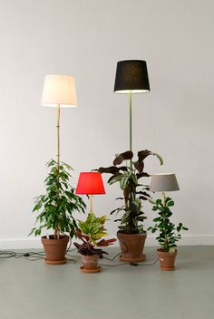 plant lamp 01 #photography #light #plant