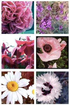 Tumblr #outdoor #photography #floral #flowers