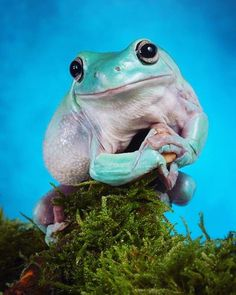 This frogs more phonemic than me goddamn