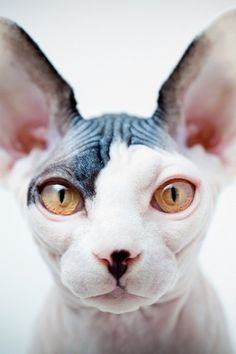 tumblr_lzjz9j2ike1qb8kh2o1_500.jpg 500×750 pixels #cat