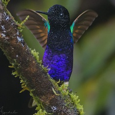 #bestbirdshots: Colorful Birds of Colombia by Luis Fernando Agudelo