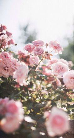 Likes | Tumblr #inspiration #natural #roses