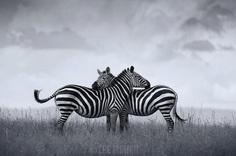 Animal Portraits by British Wildlife Photographer Lee Fisher