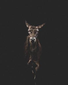 #folkscenery: Adorable Animal Portrait Photography by Douglas Fir