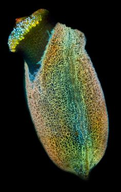 Extraordinary Microscope Photographs - The Big Picture - Boston.com