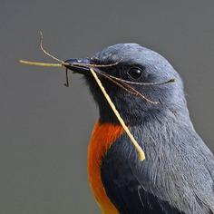 Birds of India: Fantastic Bird Photography by Ramakant Kulkarni