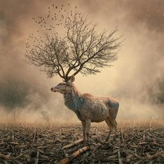 The Collective Loop - Caras Lonut: Surreal Phot Manipulations #photography #deer #manipulations #caras lonut