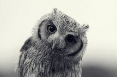I was never Elvis » Every Reason to Panic #owl