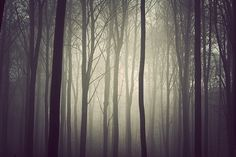 The Trees on the Behance Network