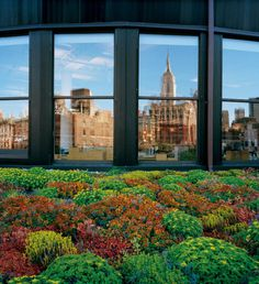 Green Roofs by Diane Cook and Len Jenshel #art #photography #inspration