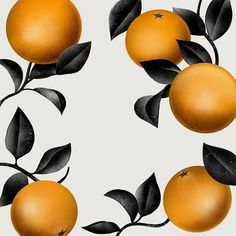 Blog - Agency - YCN #ycn #print #fruit #citrus #bonaque #wallpaper #borja
