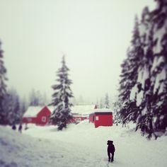 Photo by jagnagra #snow