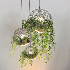 Geodesic terrariums by Atelier Schroeter