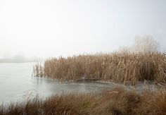 Frozen Trees New Zealand by Peter Clarke Photography Australia #zealand #frozen #landscape #mist #moody #ice #trees #new