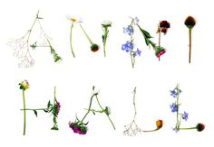Anni Hall designed by Dittmar #flowers #typography