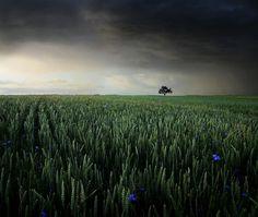 Little Blue Stars, photography by Egon Kronschnabel